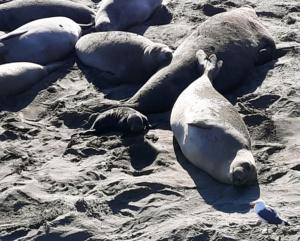 Camping near elephant seals